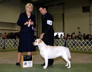 Labrador Retriever Breeder MI